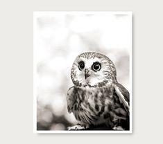Cute Owl photo black and white woodland animal by semisweetstudios, $30.00