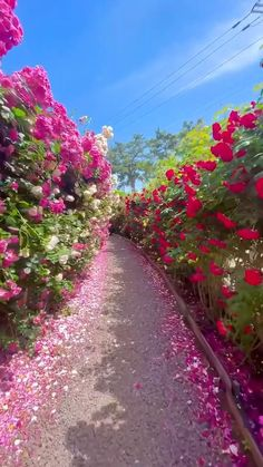 Beautiful Scenery Pictures, Beautiful Photos Of Nature, Beautiful Places To Travel, Beautiful Roses, How Beautiful, Beautiful Landscapes, Beautiful Gardens, Flower Feild, Science And Nature