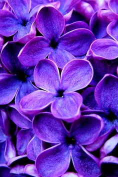 design-dautore.com: COLOR MOOD:VIOLET
