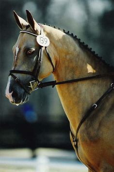 Gallery - Akhal-Teke Association of America