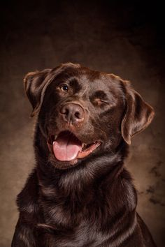 Chocolate Labrador Retriever by Tobias Gawrisch on 500px