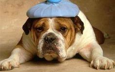Curiamo la cefalagia con i rimedi omeopatici #medicina #cefalalgia #omeopatia