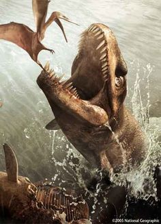 Dakosaurus: The Theropod-Headed Sea-Croc.   Size: 15 feet (4.5 meters).   Time Period: The Late Kimmeridgian to Early Berrasian Stages of the Late Jurassic to Earliest Cretaceous.   Locale: Fossils referable to Dakosaurus have been found in England, France, Germany, Poland, Argentina, Mexico, Switzerland, and Russia.
