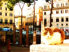 Rome & Cats