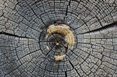 Tree Trunk Mandala via Hidden Creek  #art #nature #mandala