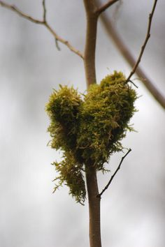 The Heart of Nature by Andrew Pescod, via Flickr