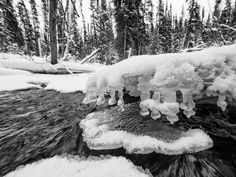 yukonchris posted a photo:  Hiking along Wolf Creek in southern Yukon, I couldn't help but notice all of the unusual and beautiful ways in which ice and water contrasted and merged with each other.  For this shot, I carefully manuevered down onto an icepan. Then, using the E-M1's tiltable touch screen, I was able to hold the camera with the very wide 7-14mm f2.8 Pro just above the water. I think the resulting photo really captures something of the cold power of the stream juxtaposed against…