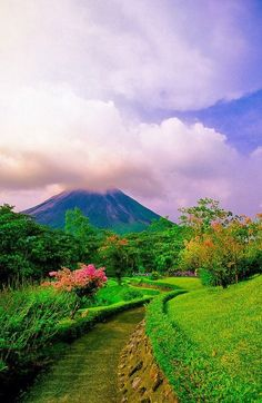 Arenal Volcano in background, Costa Rica