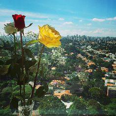 Que eu vejo flores em São Paulo!! #DiaLindo #SãoPaulo #view...