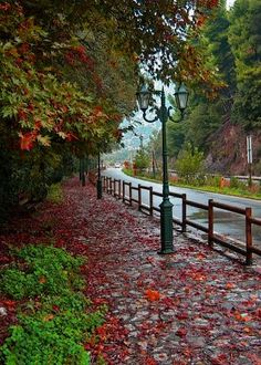 pavement with autumn colours- Xanthi, Greece Beautiful Nature Pictures, Beautiful World, Beautiful Places, Santorini Villas, Myconos, Greek Flowers, Greece Pictures, Outdoor Pictures, Into The West