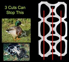 3 cuts to plastic stop animal death. Thanks to Give a Shit about Nature for the image!