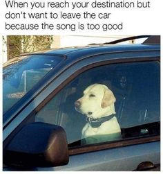 small Dog Memes Do you love Dogs? Well you will surely enjoy these super hilarious latest funny memes about dogs, make sure to share the Memes Humor, Funny Dog Memes, Really Funny Memes, Stupid Funny Memes, Funny Relatable Memes, Funny Posts, Funniest Memes, Sarcastic Memes, Humour Quotes