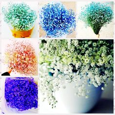 1BAG=100pcs HOT sale rare japanese babysbreath Seeds mini Balcony Potted flower seeds bonsai home & garden plants free shipping