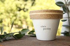 4 Elvis Parsley  Parsley Herb Indoor and Outdoor Pot or
