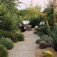 Great outdoor desert space with large concrete pads that have an exposed aggregate finish (© Jennifer Cheung)