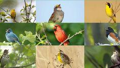 AABB Bird Song Screenshot