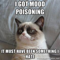 Grumpy cat mood poisoning #grumpy cat #tard the cat