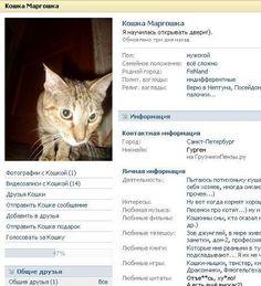 Кошка Маргошка.