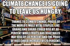 Climate Change to Drive Food Prices Up By 40 Percent