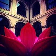 Blooming Milano