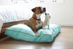 henry & suzie on a huge size 'nightswimming' dog bed duvet.  that's over 100 lbs of dog on one bed!