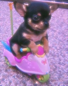 Baby Animals Pictures, Cute Animal Photos, Funny Animal Pictures, Funny Chihuahua Pictures, Funny Dogs, Funny Animal Jokes, Cute Funny Animals, Animal Memes, Animal Humor
