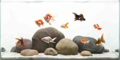décor d'aquarium avec des pierres et des poissons