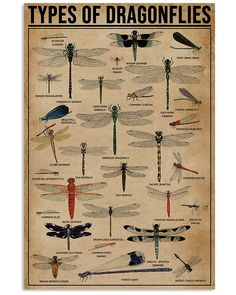 Types Of Dragonflies shirts, apparel, posters are available at Ateefad Outfits Store. Types Of Dragonflies, Bugs And Insects, Survival Skills, Things To Know, The Great Outdoors, Mother Nature, Just In Case, Gifts For Kids, Helpful Hints