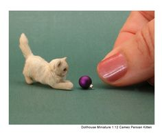 Kerri Pajutee Miniature Animals ~ Cameo Persian Kitten