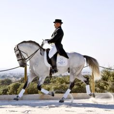 Portuguese Classical Dressage ❤ liked on Polyvore