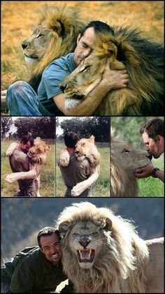 Kevin Richardson...the lion whisperer <3 <3 <3