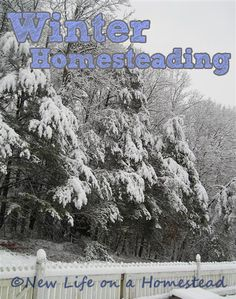 Homesteading Through The Winter. How to stay productive during the cold winter months. Great ideas!  via: http://newlifeonahomestead.com