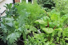 Have a shady space in your garden? Or you have a shady balcony? Learn about the edible plants that grow in shade.