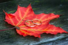 Rings on the maple leaf | maple leaf, ring, gold, wood