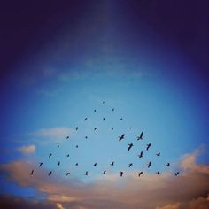 """Birds fly in precise triangles, spirals, and other improbable formations in the digital photo collage series """"Flying Formation"""" by artist Shaun Kardinal. Artistic Photography, Art Photography, Map Collage, Flock Of Birds, Flying Birds, Quirky Art, Community Art, Mother Nature, Illusions"""