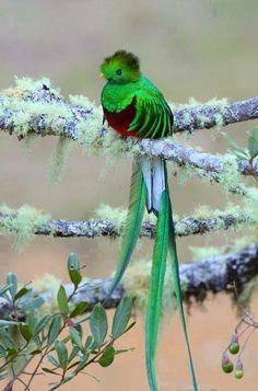 Vogeltje met lange staart
