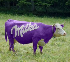 Milks chocolate's mascot, the purple cow! It's actually Swiss, not German, but Milka was such an important part of my childhood. The Purple, Purple Cow, All Things Purple, Purple Haze, Shades Of Purple, Purple Stuff, Chocolate Milka, German Chocolate, Purple