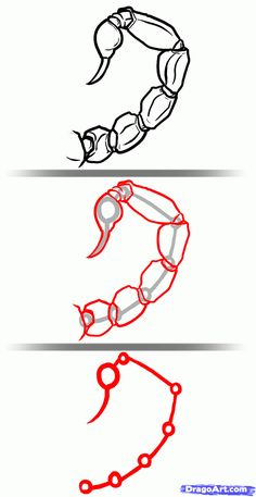 how-to-draw-scorpions-step-3_1_000000127385_5.gif 800×1,550 pixels