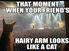 #recap It's definitely a cat  http://www.thepoke.co.uk/2015/10/15/definitely-cat/…