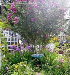 "Great oasis for a small yard! The pink tree is a ""Lucy"" Rose of Sharon. zn Sun to Partial Shade Rose Garden Design, Garden Design Plans, Love Garden, Shade Garden, Purple Flowering Plants, Flowering Shrubs, Rose Of Sharon Tree, Lucy Rose, Garden Front Of House"