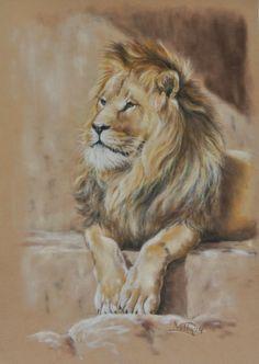 Lion. Pastel on Velours  www.netkor.nl