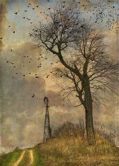 sounds of silence by jamie heiden. I could definitely look at this every day Watercolor Landscape, Landscape Art, Landscape Paintings, Landscapes, February Colors, Photo Texture, Old Images, Tree Art, Nature