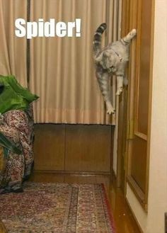 Funny cats doing funny things. Pictures of funny cats with captions.
