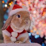 mumitan @mumitan *Merry Christma...Instagram photo | Websta (Webstagram)