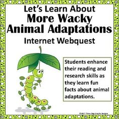 More Wacky Animal Adaptations - Fun Internet Webquest Reading Research Activity Did you know that one species of ant will actually explode itself to protect the colony? Do you know how a sand grouse is able to carry water from place to place? Your