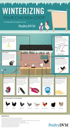 Chicken Coop - PoultryDVM - Winterizing your Chicken Coop Infographic Building a chicken coop does not have to be tricky nor does it have to set you back a ton of scratch. Chicken Barn, Chicken Coup, Chicken Runs, Chicken Life, Chicken Coop Winter, Inside Chicken Coop, Small Chicken Coops, Chicken Waterer, Best Chicken Coop