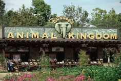 My Magic Plus: Picking Fast Passes At Animal Kingdom | Your Best Friend in the World