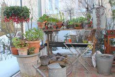 Våronn i drivhuset hos Finn Schjøll : Bygg.no - Byggeindustrien Garden Art, Flowers, Plants, Furniture, Home Decor, Homemade Home Decor, Flora, Home Furnishings, Plant