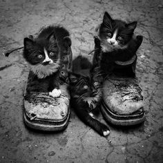 These boots were made for....  http://catsland.tumblr.com/