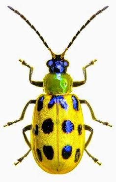 Beautiful beetle!